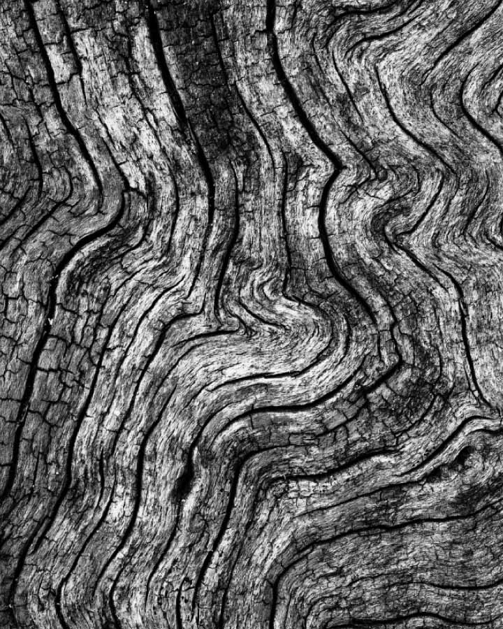 Vincent monochrome bark