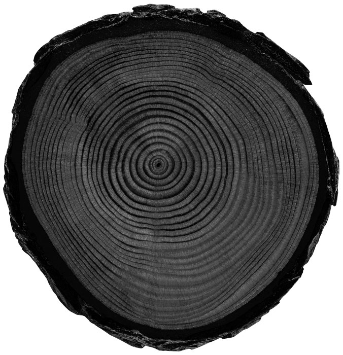 Black tree stump